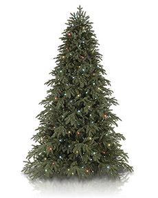 Portland Pine&trade; <span>|9'|Full 62"
