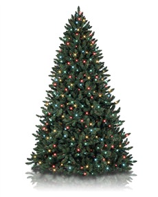 Balsam Spruce <span>|4'|Full 33"
