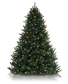 Alexander Fir&trade; Tree <span>|4.5'|Full 40"