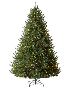Alexander Fir&trade; Tree<span>|9'|Full 66"