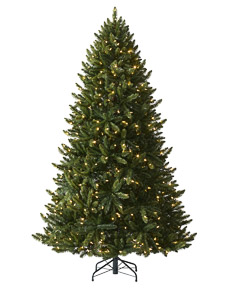 Balsam Spruce <span>|7'|Full 51"