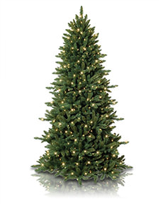 Slim Spruce Christmas Tree <span>|8'|Slim 55"