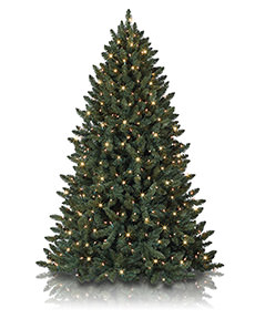 Balsam Spruce Rotating Tree <span>|7'|Full 51"