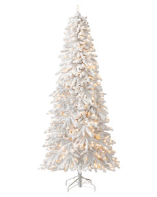 Frozen Fir <span>|6'|Slim 36"