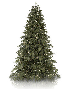 Portland Pine&trade; <span>|9'|Full 69"